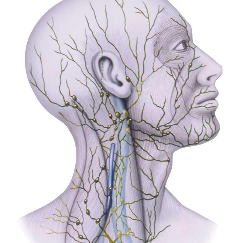 Tečaj limfne drenaže