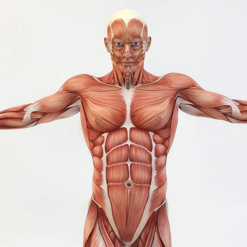 Tečaj anatomije in fiziologije