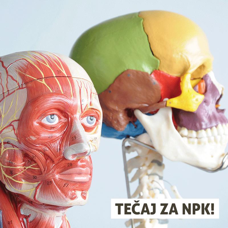Tečaj anatomije in fiziologije – ONLINE